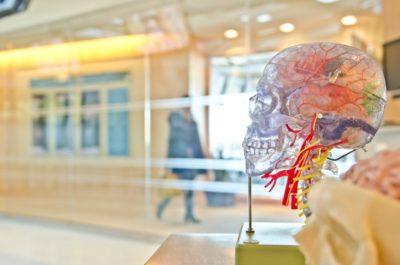 Три самых распространенных мифа о мозге